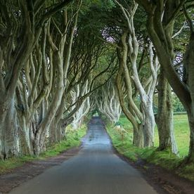 The Dark Hedges (The Kingsroad)